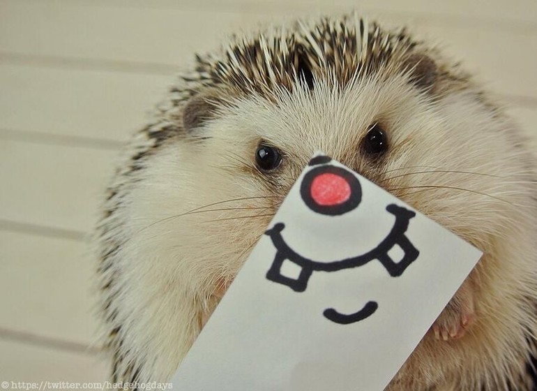 Le buzz Twitter du moment : Murato the hedgehog